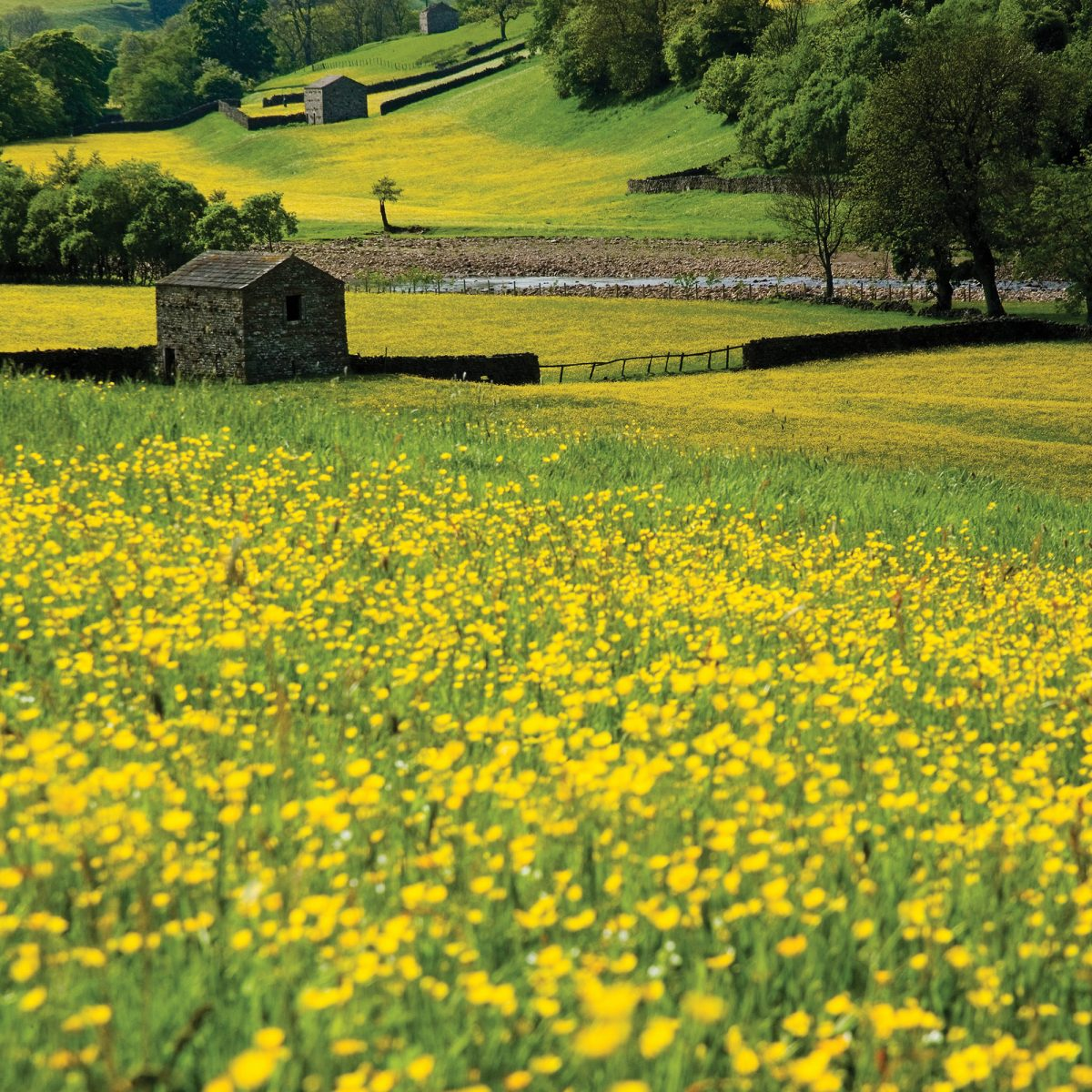English country meadow with a barn